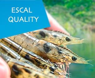Escal Quality